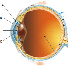 The figure shows a structure of human eye
