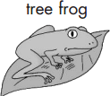 Figure shows a picture of tree frog