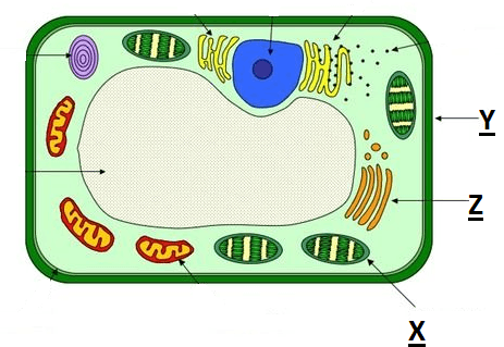 The figure shown plant cell structure