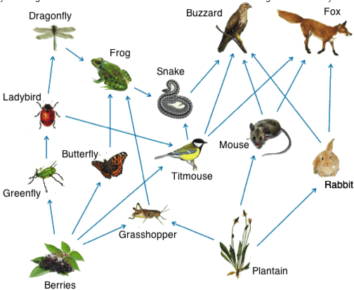 Above picture shows a systematic food web