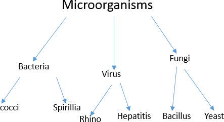 Picture shows types of microorganisms and their examples