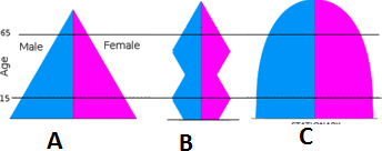shows three types of population pyramids in the age of 15-65.