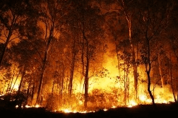 The figure shown forest fire
