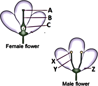 above picture shows female and male parts of a flower