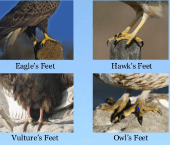 here Image shows feet of some birds
