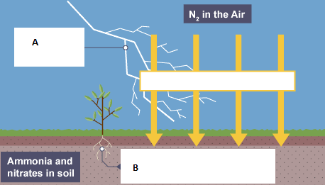 Diagram shows a part of nitrogen cycle