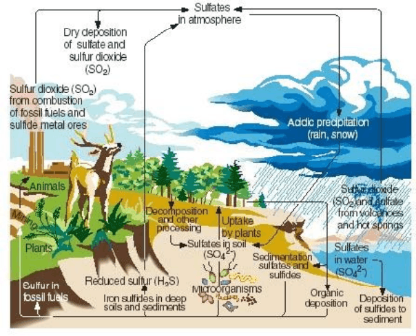 Image shows sulphur cycle