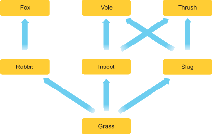The figure shows a food web of grassland ecosystem.