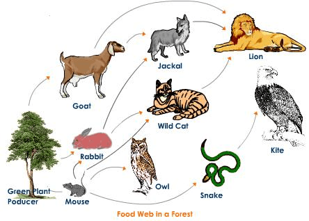 Image shows a food web