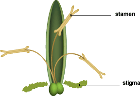 Figure shows a grass flower