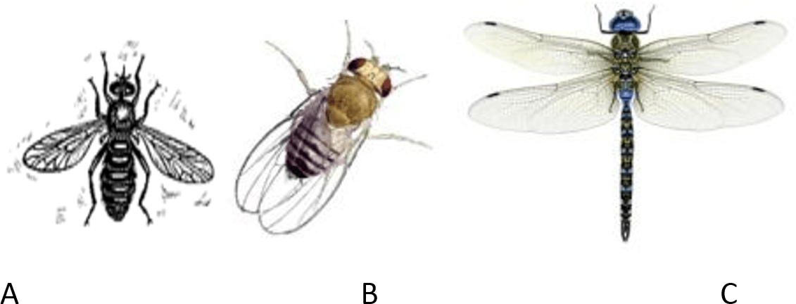 Image shows different kind of insects