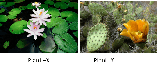 Figure shows two different plants