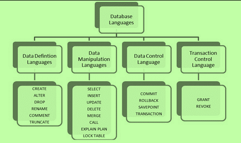 Image of The DBMS