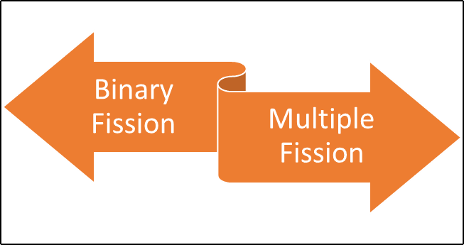 Types of Fission