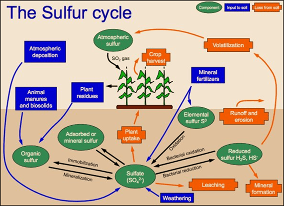 The Sulphur Cycle