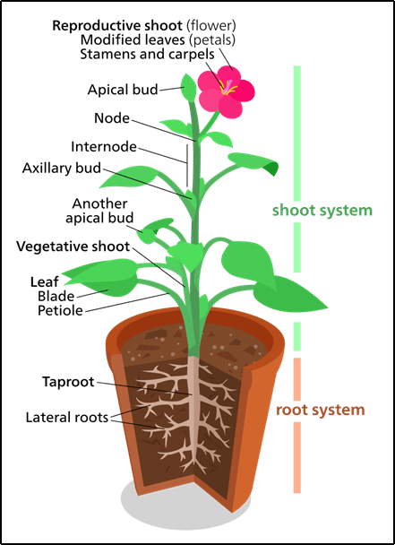 The most common type of plant