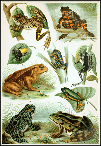 Introduction to Frogs