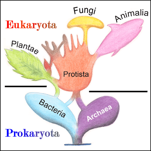 The origins of eukaryotes