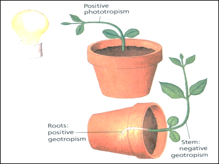 Movements in Plant
