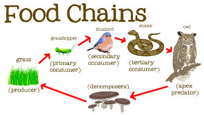 Image Food Chains