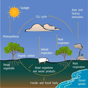 Image Fossills and fossil fuels