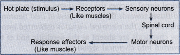 Image Figure shown the reflex actions