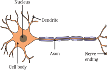 Image the structure of a neuron