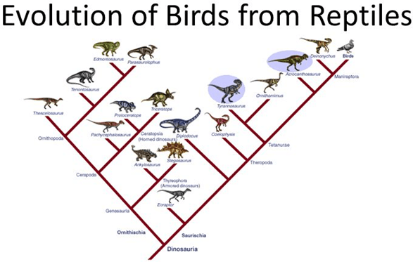 Image evolution of birds from reptiles