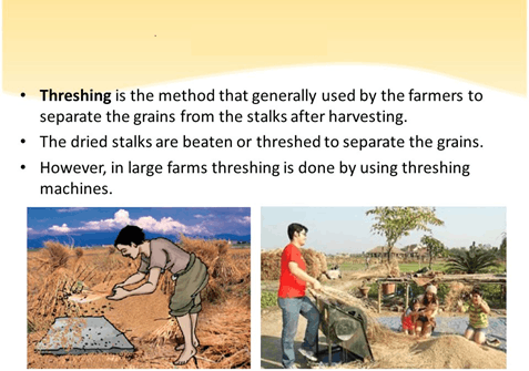 Image of Threshing