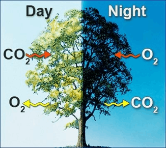Image of Respiration during day and night
