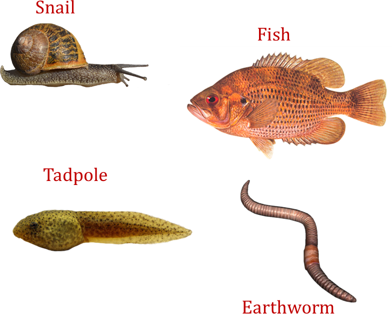 Image of Snail, Fish, Tadpole, Earthworm
