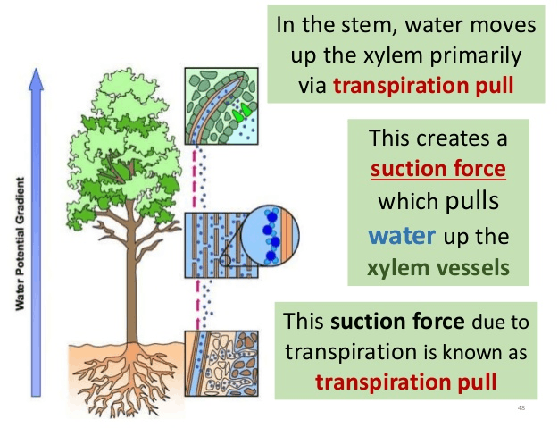Image of Suction force
