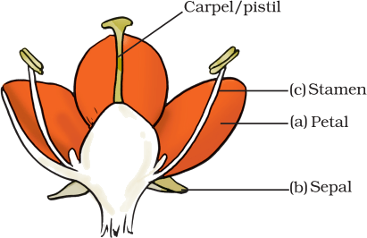 Result for a bisexual flower given as Figure (A)