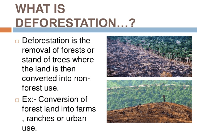Image of what is deforestation