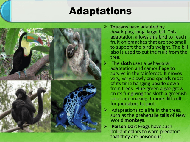 Image of adaptive features of animals