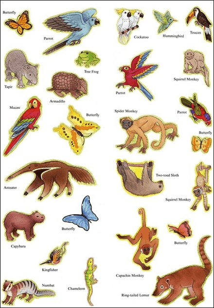 Image of tropical rainforest animals