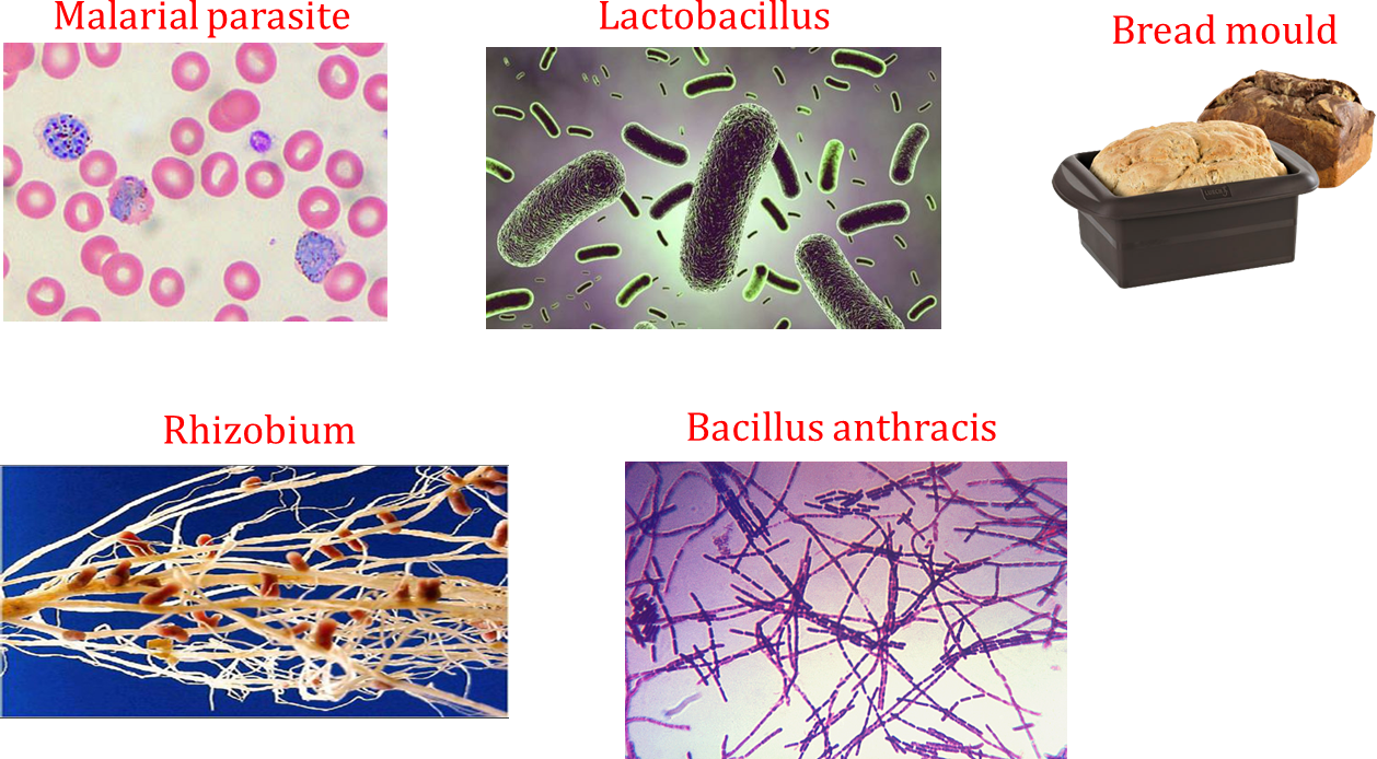 Image of microorganisms