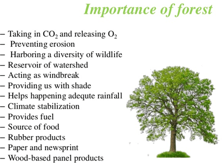 Image of important to conserve forests