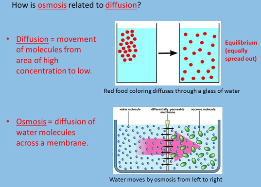 Image of osmosis and diffusion