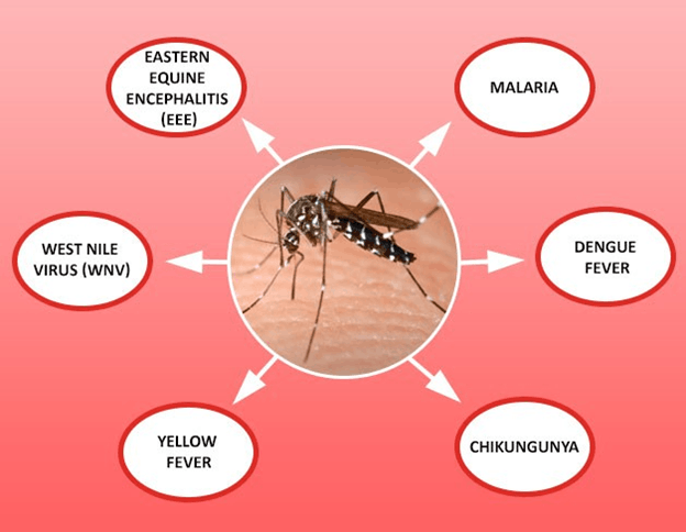 Image the disease transmitted by mosquito