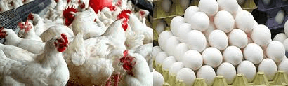 Image the Poultry farming