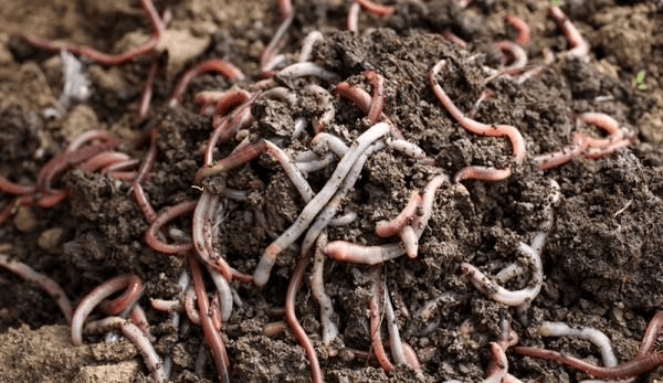 Image the Vermicompost