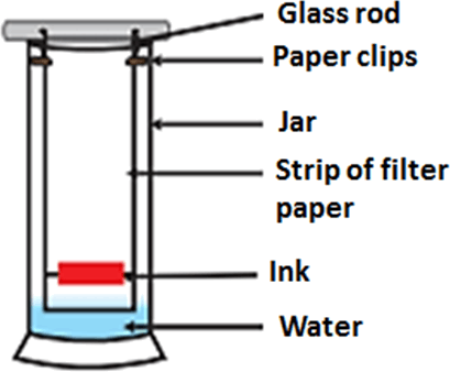 Result for strip of filter paper