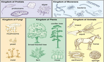 Image the classification of living organisms