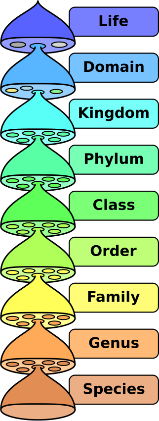 Image the taxonomic hierarchy family