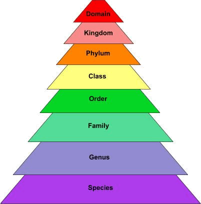 Image of the taxonomical hierarchy level