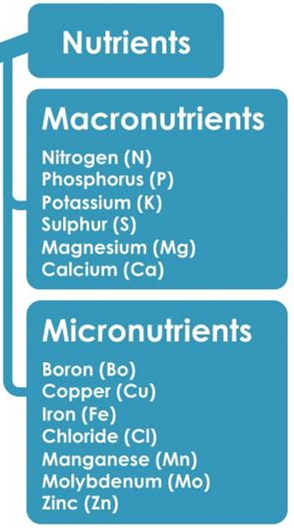 Image of the macronutrients and micronutrients