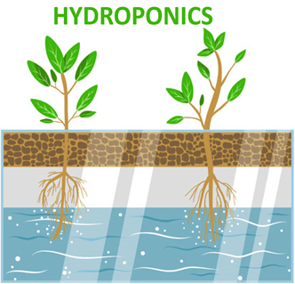 Image shows the hydroponics