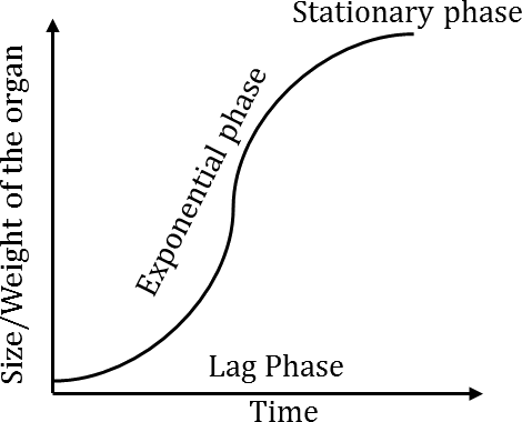 Q 3 Image of Exponential Phase