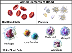 Image of the formed elements of blood